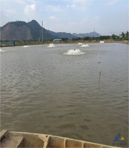 海鲈鱼池塘杀虫缺氧中毒的处理方法