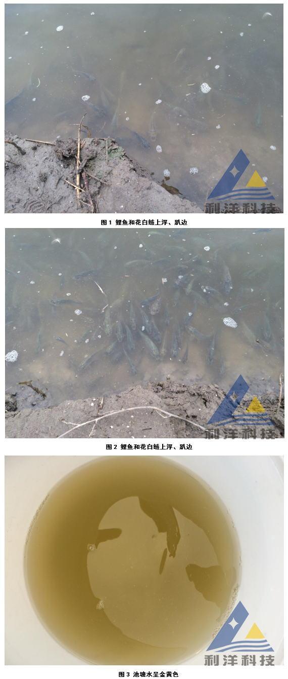 高温期池鱼小三毛金藻中毒死亡一例