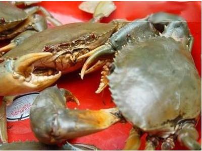 广西钦州青蟹 味道鲜美营养价值高