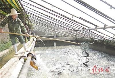 """河南焦作市武陟县村支书何永利的""""温室养鱼""""故事"""