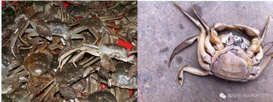 虾蟹烂肢及断肢病的防治技术