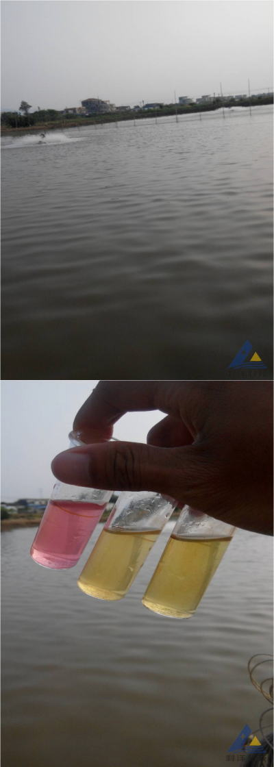 尖吻鲈(盲曹)肥水后死亡大量减少一例