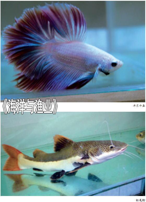 热带观赏鱼的运输方式和包装方法