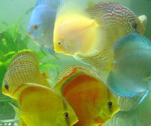 观赏鱼饵料有哪些,观赏鱼吃什么?