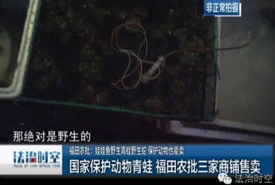 广东深圳一市场宣称卖的野味集体消失 娃娃鱼和蛇不见踪影