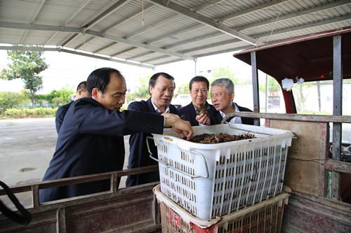 湖北省千赢电子游戏平台局局长李胜强赴随州孝感调研春季渔业生产