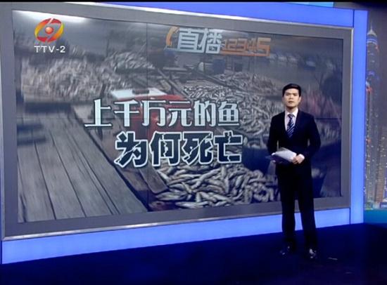 浙江温岭:马上可以上市的鱼几千斤几千斤的死 养殖户损失千万元