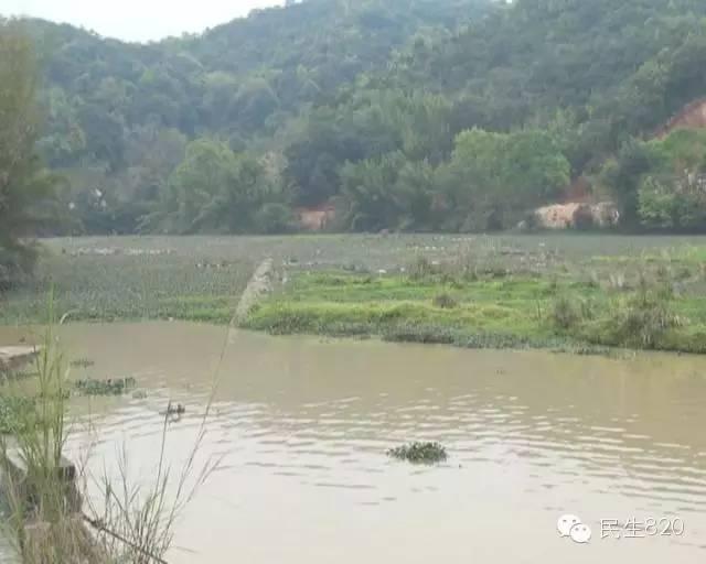 广东梅州大埔:水体受污染,因养殖场在青溪库区内养猪养鱼