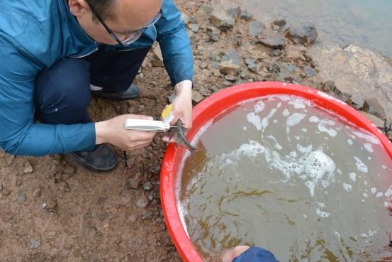 云南昭通市渔业站在渔洞水库进行标志放流